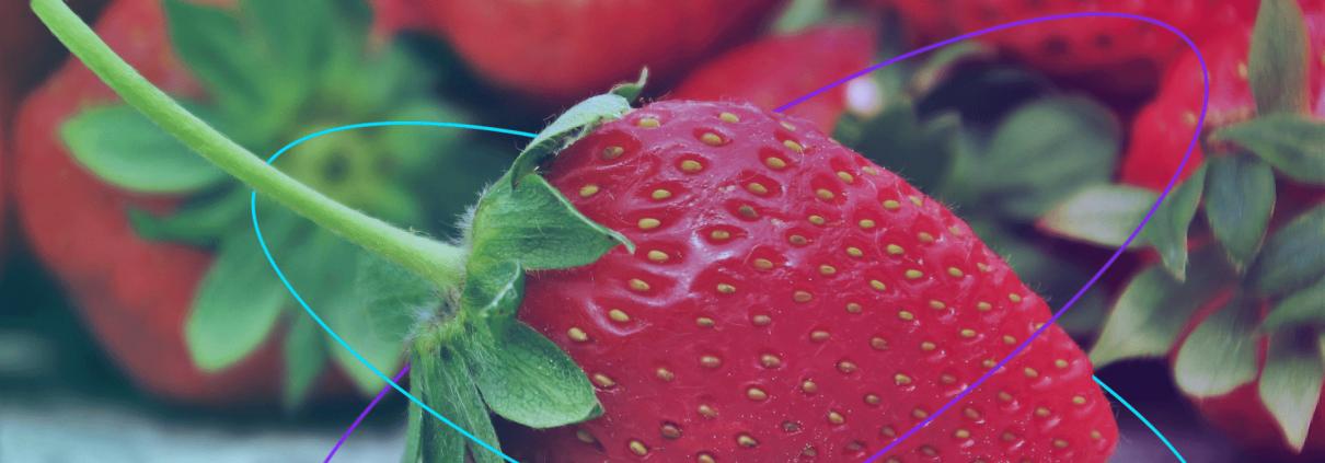 Sigfox, internet vecí, poľnohospodárstvo, jahody